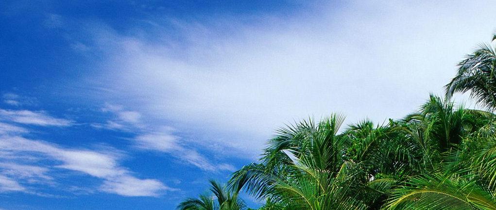 palms_pic