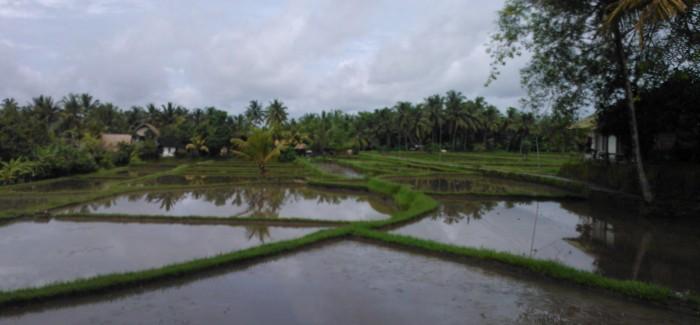 Bali – Indonesian helmi